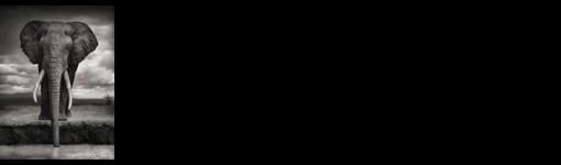 big life_logo